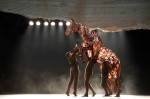 AUST PROD WAR HORSE - Joey rearing