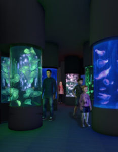 Sea Jelly Exhibition Opening at Sea World