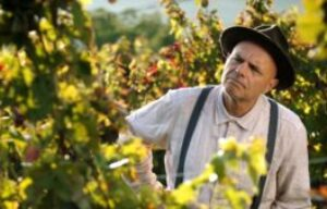 FILM REVIEW RELEASE…… FROM THE VINE