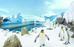 Celebrate World Penguin Day at Sea World