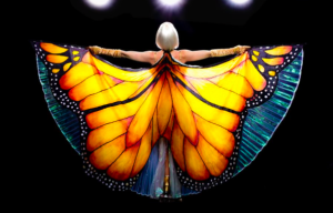 THE BUTTERFLY TREE ROLLS CAMERA IN TAMBOURINE MOUNTAIN