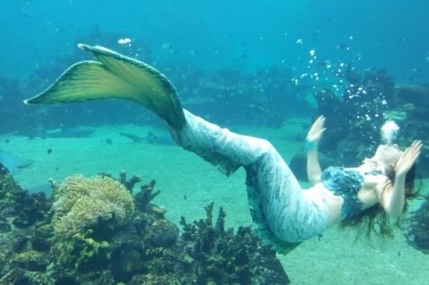 Mermaids Surface At Sea World