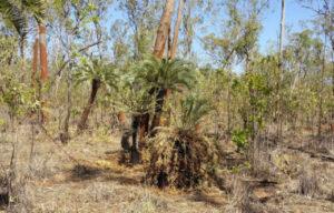 20 new Queensland plant species