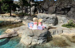 Sea World's Polar Bear Cub 'Mishka'  Celebrates her Second Birthday