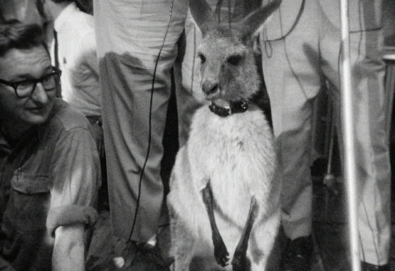 NATIONAL FILM AND SOUND TRIBUTE SKIPPY