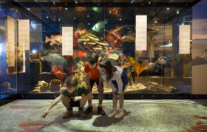 What's On – Queensland Museum Network September 2020